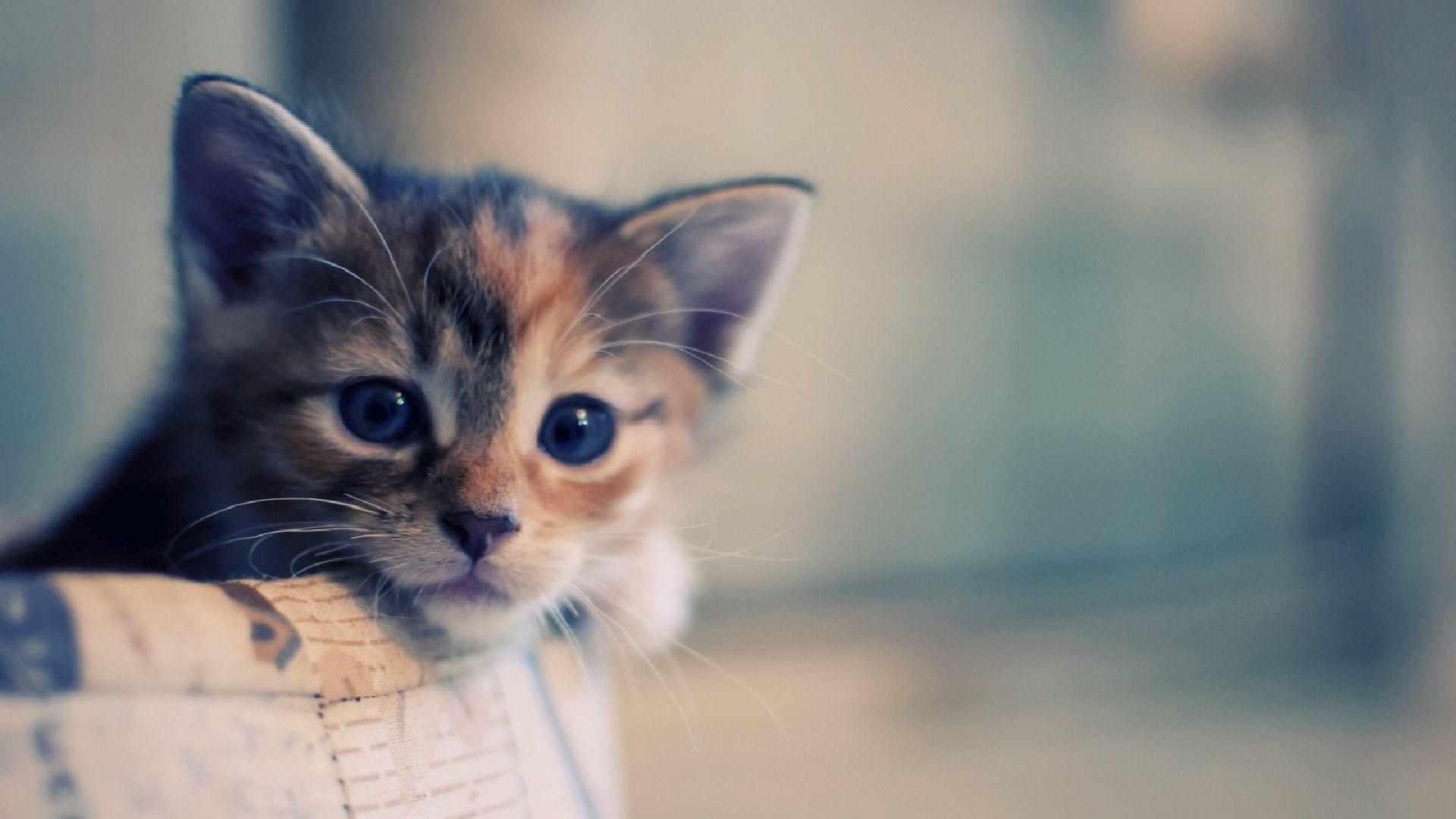 Можно ли продавать кошек